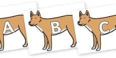 A-Z Alphabet on Dingo