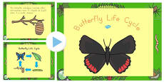 Australia - Butterfly Life Cycle PowerPoint