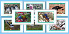 Australian Birds Display Photos