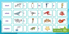 Under Eights Week: The Coast Picture and Word Matching Cards