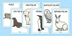Animalele de la Poli - Planșe
