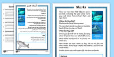 Sharks Differentiated Reading Comprehension Activity Arabic Translation