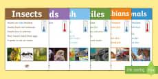 Animal Groups Display Poster Photos
