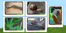Slugs and Snails Photo Pack
