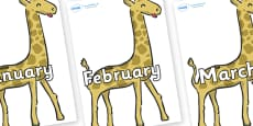 Months of the Year on Giraffe