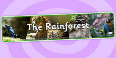 The Rainforest Photo Display Banner