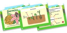Australia - Germination Lesson Teaching PowerPoint