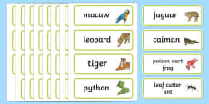 Rainforest Explorer Role Play Word Cards