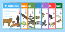 Animal Groups Display Posters
