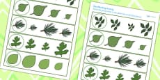 Leaf Size Matching Activity Sheet