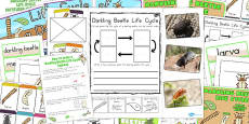 Australia - Darkling Beetle Life Cycle Lapbook Creation Pack