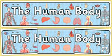 The Human Body Display Banner