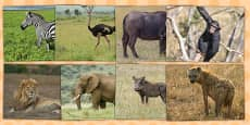 African Animals Photo Clip Art Pack