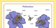 Pollination Word Mat