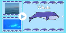 Under the Sea Whale Video PowerPoint