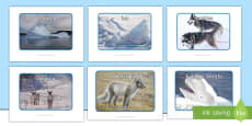 Polar Regions Display Photos