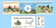 Buddha and the Injured Swan PowerPoint and Script