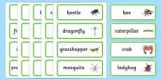 Australia - Minibeasts Word Cards