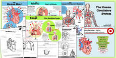 Year 6 Human Body Circulatory System Lesson Teaching Pack with Posters