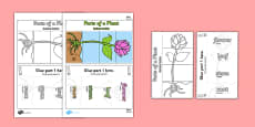 Parts of a Plant Foldable Interactive Visual Aid Template Polish Translation