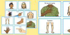 Tarjetas de comunicación - Las partes del cuerpo