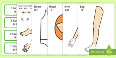 Body Part Counting Cut Out Activity English/Mandarin Chinese