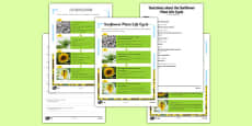 Sunflower Plant Life Cycle Differentiated Reading Comprehension Mandarin Chinese Translation