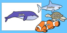 Months of the Year on Sea Creatures French