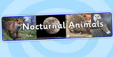 Nocturnal Animals Photo Display Banner