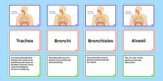 KS3 Science Parts of Respiratory System FaF Activity