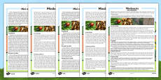 Minibeasts Differentiated Reading Comprehension Activity Romanian Translation