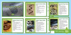 10 of Australia's Dangerous Snakes Fact Cards