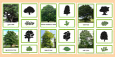 British Trees and Leaves Three Part Matching Cards