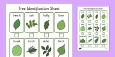 Tree Identification Sheet