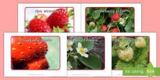 Strawberry Life Cycle Display Photos