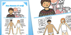 Parts of the Body Poster Welsh