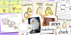 Australia - Hen Life Cycle Resource Pack