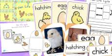 Australia - Hen Life Cycle Resource Pack
