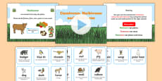 Identifying Herbivores, Carnivores and Omnivores Differentiated Lesson Teaching Pack