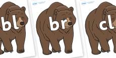 Initial Letter Blends on Bear