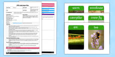 Minibeasts Describe It and Find It EYFS Adult Input Plan and Resource Pack