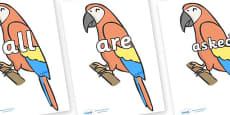 Tricky Words on Parrots