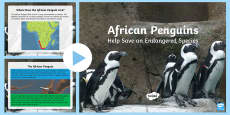 African Penguins Help Save an Endangered Species PowerPoint