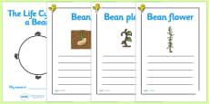 Bean Life Cycle Workbook