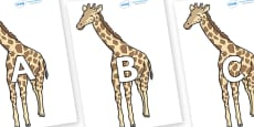 A-Z Alphabet on Giraffe