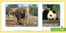 Zoo Animals Display Photos