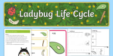Life Cycle of a Ladybug Early Childhood Resource Pack