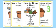 How to Grow a Plant Posters Urdu Translation