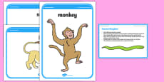Foundation PE (Reception) Animal Kingdom Cool-Down Activity Card