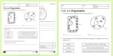 KS3 Cells and Organisation Homework Activity Sheet